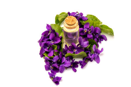 Wood Violet (Viola Odorata) flowers with a cone for essential oil, isolated on white background in close-up. Place for text. Stock Photo