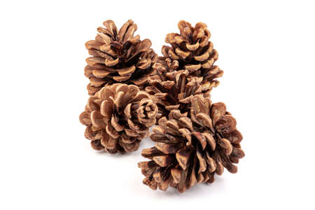 Christmas pine cone isolated on white background.