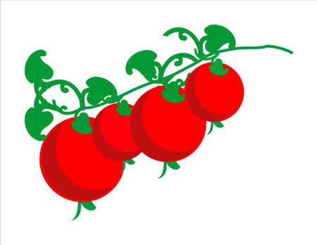 cherry tomatoes: Cherry tomatoes on the branch