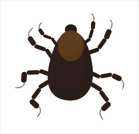 nymph: mite, tick, nymph