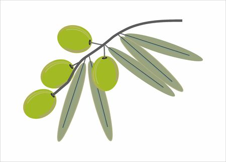 olive green: Green Olive branch isolated