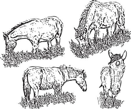 foreshortening: Horse, Running, Isolated, White, Animal, vector; foreshortening