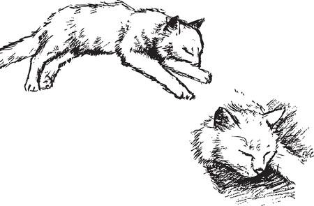 lies: catsealthe pet  young lies vector drawing