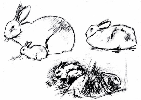 rabbitpet hare houseanimal grass vector black drawing sketch  Vector