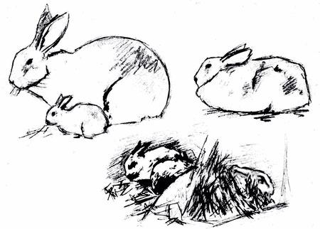 rabbitpet hare houseanimal grass vector black drawing sketch Stock Vector - 23262629