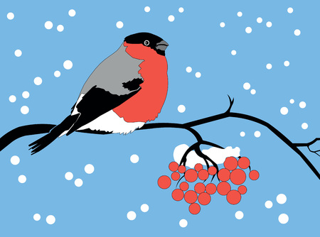 bullfinch winter  snow  vector  mountain  ash  bird  wild  new year  branch  tree  red  blue  sky  precipitation  black  gray Vector