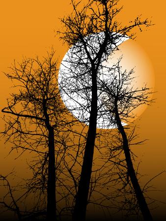 Immagine di una silhouette nera di un albero contro il cielo notturno con un mese.