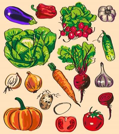 Preview variety of vegetables and root crops in the form of color on the sheet. Illustration