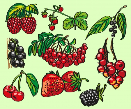 bramble: Image of different varieties of ripe berries on a green leaf. Illustration