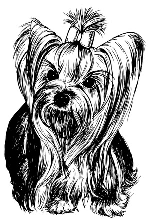 yorkshire: Yorkshire Terrier dog - hand drawn vector llustration isolated