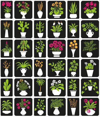 greek pot: icone su sfondo nero piante d'appartamento a tema e fiori