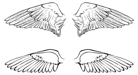 animal limb: hand drawing two pairs of wings on a white background