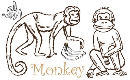 drawing on a white background two monkeys and bananas