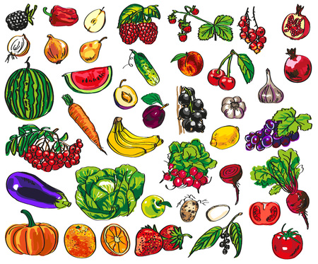 illustration of colorful vegetables, fruits and berries on a white background