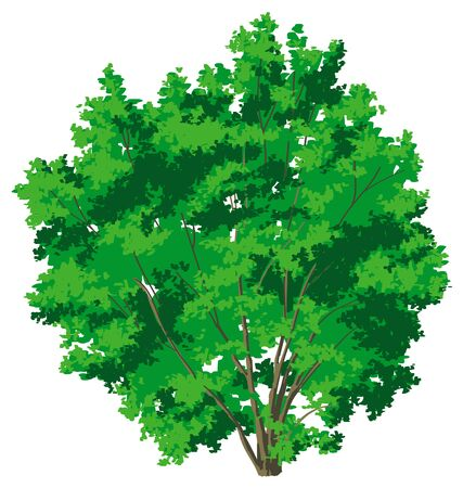 lush: tree with lush green foliage on a white background Illustration