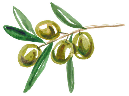 olive green: Watercolor illustration on a white background branch of green olives Illustration