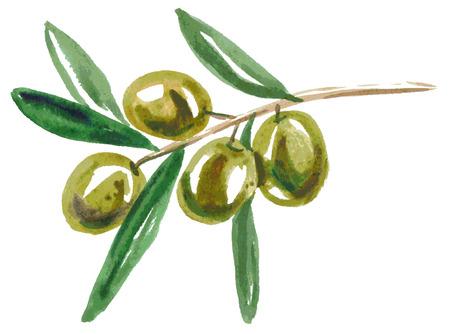 olive leaves: Watercolor illustration on a white background branch of green olives Illustration