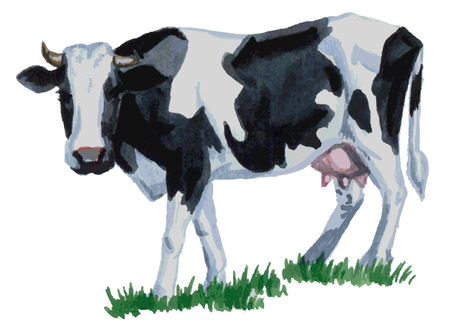 watercolor illustration of a white background cow on green grass