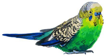 loro: Ilustración de la acuarela en un fondo blanco ondulado verde loro pájaro Vectores