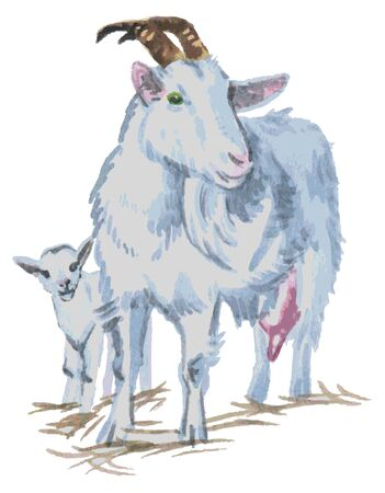 background next: Watercolor illustration on a white background next to a goat kid