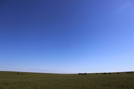 vastness: Photo rye field and blue sky in the summer in Russia Stock Photo