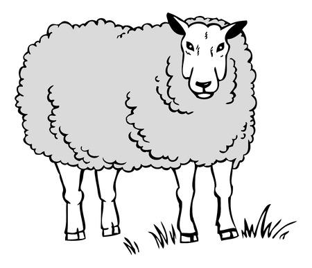 disegno a mano: disegno a mano pecore bianche su uno sfondo bianco sul prato Vettoriali