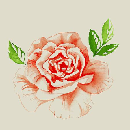 bud: watercolor illustration of a red rose bud with green leaves Illustration