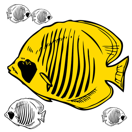 butterfly fish: hand drawing on a white background butterfly fish Red Sea Illustration