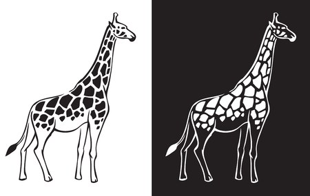 camelopardalis: animal giraffe on white and black background