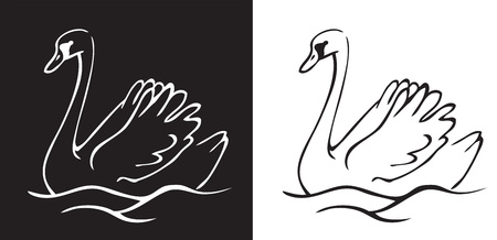 Swan swims on white and black background Illustration