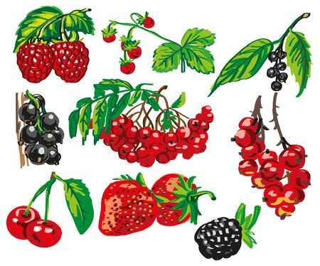 bramble: different varieties of ripe berries on a green leaf on white background.