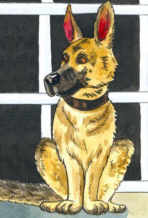 german shepherd dog: illustration watercolour a German shepherd dog sitting in profile Stock Photo