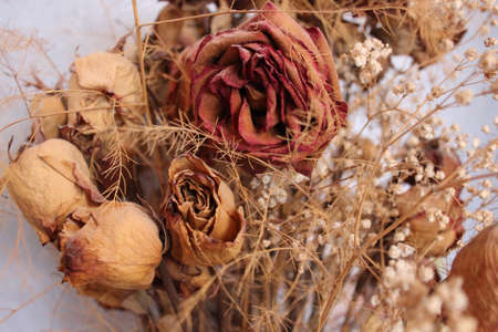 flores secas: photo background with rose dried flowers and plants Foto de archivo