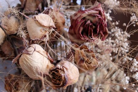 dried flowers: photo background with rose dried flowers and plants Stock Photo