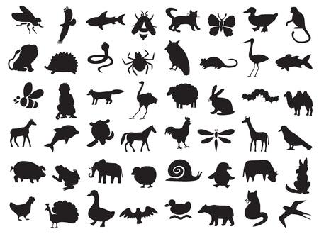 sylwetki dzikich i domowych zwierząt, ptaków i owadów na białym tle.