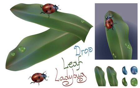 leaf insect: illustration on white background insect ladybug with leaf of plant and drop of water