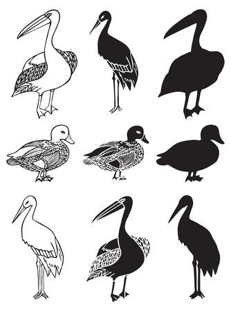 illustration on white background bird pelicans, duck and stork decorative pattern silhouette Banco de Imagens - 84885250
