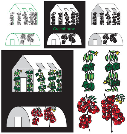 illustration of greenhouse tomatoes and cucumbers growing on white and black background