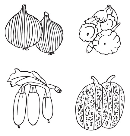 illustration on white background fruits and vegetables: melon, onions, zucchini, squash