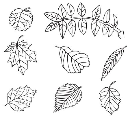 illustration on white background leaves of different trees of linearly