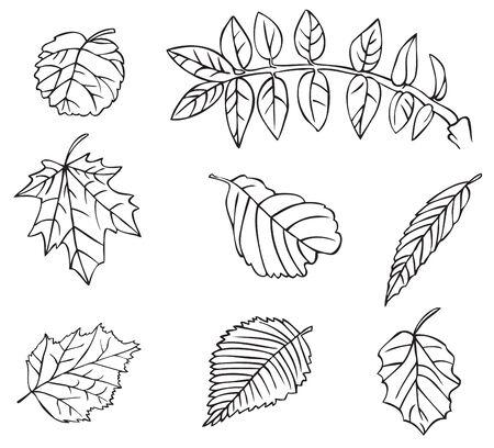 Illustrazione su sfondo bianco foglie di diversi alberi di linearmente Archivio Fotografico - 85037995