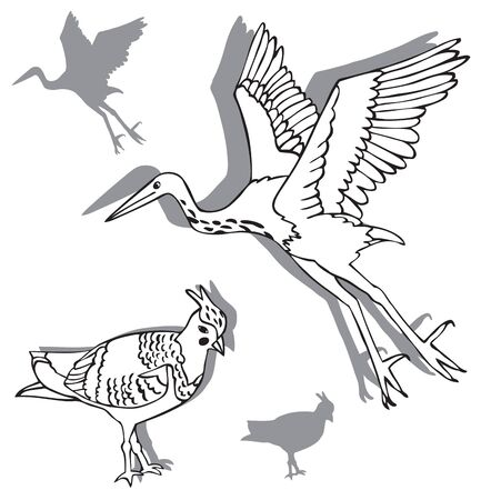 Illustration on white background two birds, Heron and lapwing silhouettes Çizim