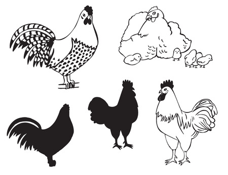 two: Illustration on white background two roosters and a hen with Chicks