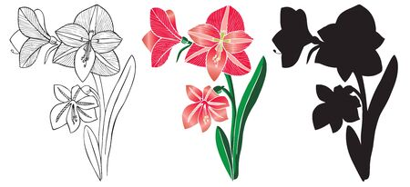 Illustrate on white background silhouette and red flower lilies home