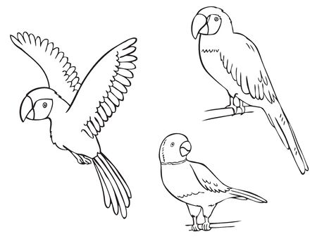 illustration on white background, macaw parrot and a watch necklace sitting on a branch and flies