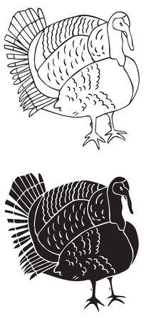illustration on white background Turkey bird figure and silhouette