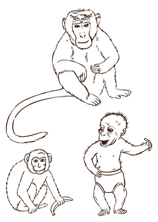 hand drawing on white background, three different monkeys with banana