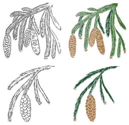 illustration on white background silhouette color and spruce branch with cones