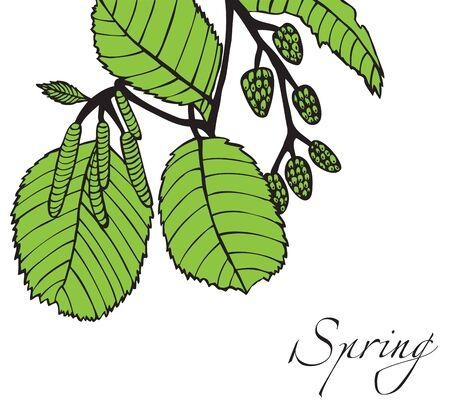Illustration on white background green tree branch with buds alder spring