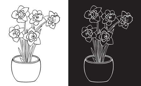 Illustration on white and black background with Narcissus flowers in a pot.